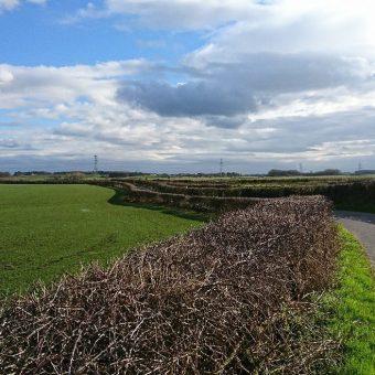 Moss Wood Caravan Walk Road Field in Cockerham