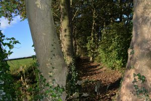 Moss Wood Woodland Walk in Cockerham