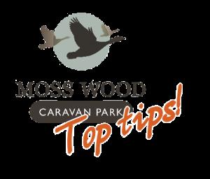 Moss Wood Top Tips