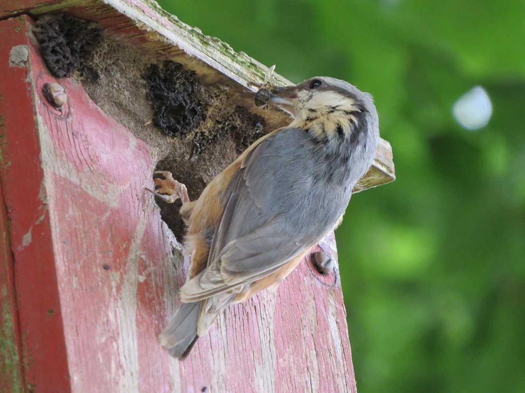 bird feeding at birdbox