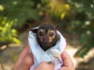 Rescue bat