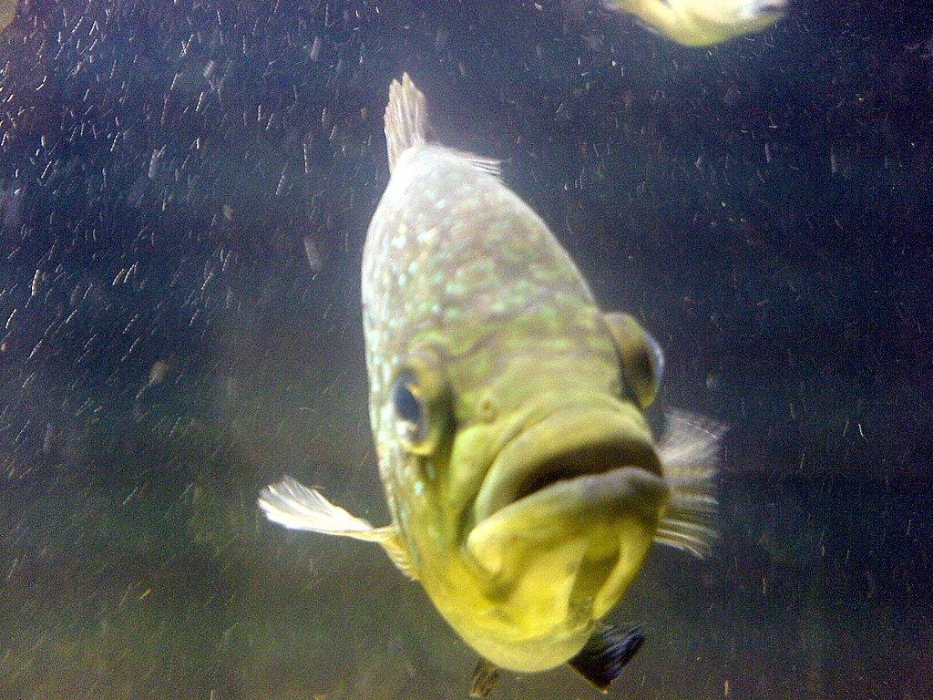 Bolton museum aquarium