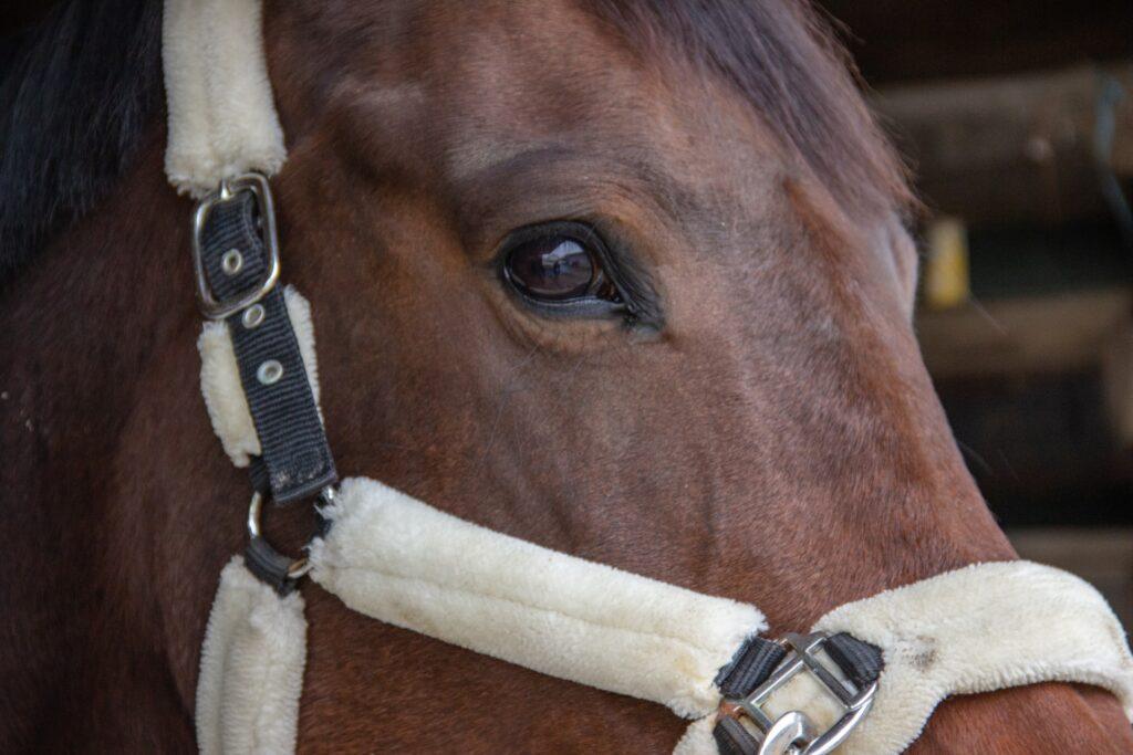 penny farm horse park