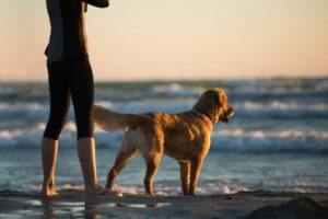Dog friendly beaches in lancashire