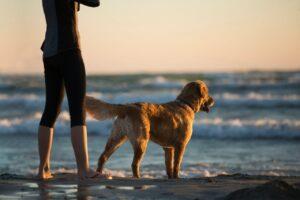 Dog friendly beaches in lancashire