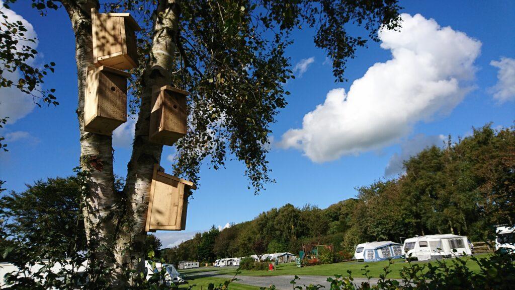Moss wood touring summer
